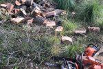 Tagliavano querce secolari a Ricadi, un arresto e due denunce