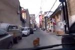 Il cane guida l'ambulanza tra i vicoli per salvare il suo proprietario