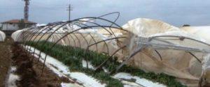 Campagne calabresi devastate dal gelo, l'allarme degli agricoltori: subito lo stato di calamità