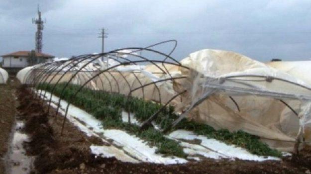 coldiretti, giorni della merla, ortaggi gelo, Sicilia, Economia