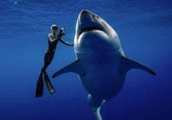 L'enorme animale che misura oltre sei metri è stato intercettato al largo delle Hawaii
