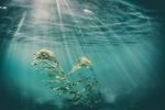 Dalle alghe marine un aiuto per abbassare la glicemia