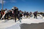 La protesta del latte non si ferma in Sardegna, assalto armato a una cisterna