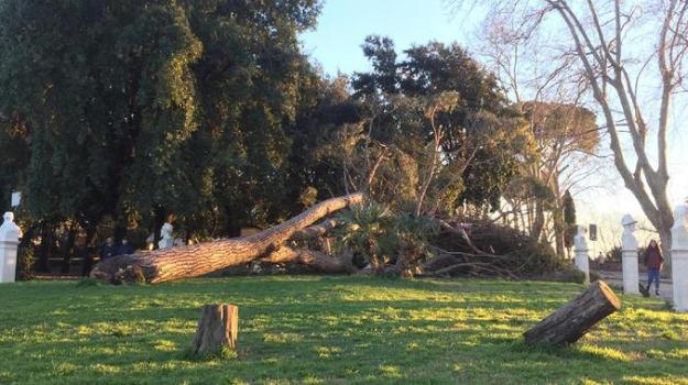 emergenza alberi Catanzaro, Domenico Cavallaro, Catanzaro, Calabria, Cronaca