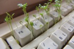 Una banca dati contribuirà alla tutela delle piante (fonte: PIxabay)
