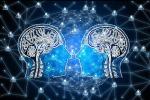 Il cervello delle donne è di tre anni più giovane di quello maschile (fonte: Pixabay)