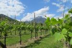 L'Italia è il quinto fornitore di vino in Cina