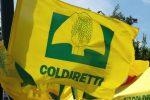 Furti fra le campagne di Francavilla Marittima, la denuncia di Coldiretti