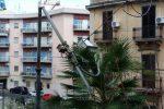 Notte di paura a Messina per il vento, divelti alberi e pali: danni alle auto