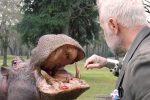 Tiene un ippopotamo in giardino, nella villa di Gianluca Vacchi arrivano i carabinieri
