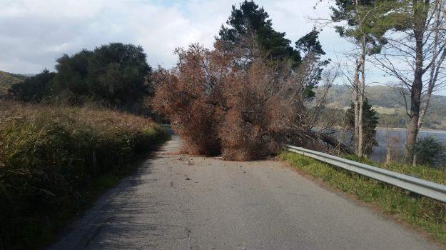 albero cade in strada, statale 110, traffico in tilt, Traffico tra Maierato e Monterosso Calabro, Catanzaro, Calabria, Cronaca