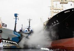 Quelli di Sea Shepherd la chiamano la «Gloriosa». Un po' perché è stata una delle prime navi della flotta dell'associazione, che oggi conta 14 imbarcazioni. Ma anche e soprattutto perché la «Bob Barker» è sempre stata in prima linea nelle missioni più ardite che gli «eco-pirati» del capi...