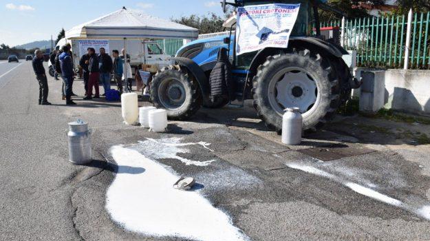allevatori in strada, protesta latte crotone, Catanzaro, Calabria, Economia