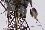 Rende, cicogna bianca uccisa nel suo nido: la Lipu chiede il divieto alla caccia