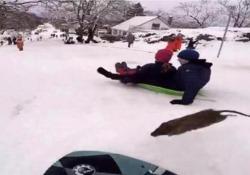 L'incontro inaspettato durante una giornata sulla neve nella Columbia Britannica, in Canada
