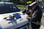 """Vigili a Messina, arriva il """"concorsone"""": 46 posti, domande entro il 30 settembre"""