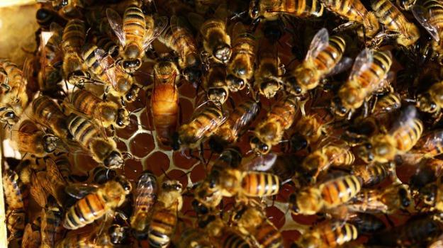 insetti, Scienza Tecnica