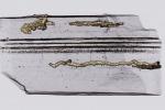 Le più antiche impronte lasciate sulla Terra da un essere vivente (fonte: A. El Albani(CNRS)