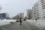 Il cagnolino aspetta che qualcuno fermi il traffico per attraversare la strada