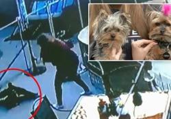 Il cagnolino è aggredito dal falco, ma arriva la padrona e ecco cosa succede La scena è stata ripresa da una telecamera di sorveglianza a Las Vegas - Corriere Tv