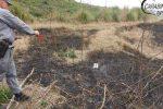 Brucia residui vegetali e provoca un incendio in un bosco, denunciato un uomo di Fiumefreddo Bruzio
