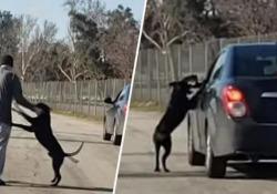 Il video dalla California: l'uomo abbandona il suo cane che non si rassegna e lo insegue