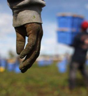 Migranti, multa di 1.400 euro per chi impiega stranieri irregolari a lavoro