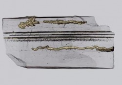 Le più antiche tracce di esseri capaci di muoversi Risalgono a 2,1 miliardi di anni fa - Corriere Tv