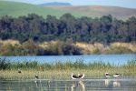 L'oasi del Pantano