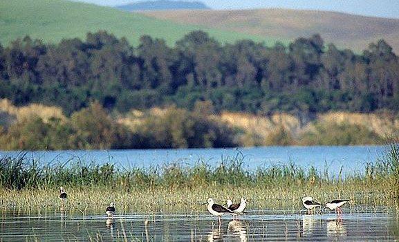 acquisizione, comune di montebello jonico, oasi del pantano, Reggio, Calabria, Politica