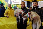 Solidarietà ai pastori