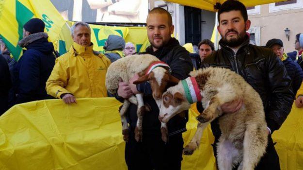 agroalimentare, Campagna Amica, coldiretti calabria, pecorino day, reggio, solidarietà ai pastori, Reggio, Calabria, Economia
