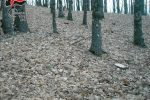 Abbattimento illegale di alberi e ricettazione di legna, un denunciato a Mesoraca
