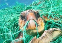 Wwf: la petizione per liberare il mondo dalla plastica L'iniziativa - Corriere Tv