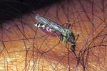 L'Italia sarà tra gli habitat ideali delle zanzare tropicali