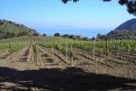 Vinitaly: Coldiretti,bene tutela tutte le Dop e Pmi del vino