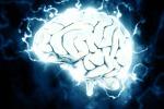 Il cervello produce neuroni fino ai 90 anni: i risultati di uno studio spagnolo