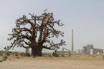 La scommessa dell'Onu, 10 anni per ripristinare ecosistema