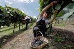 Dalle colture alle cantine, cresce agroecologia in Italia