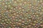 In particolari condizioni e poggiate su una superficie trasparente, semplici gocce d'acqua producono colori brillanti senza bisogno di tinte o inchiostri (fonte: Felice Frankel)