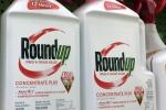 ++ Usa: Monsanto condannata a pagare 80mln su diserbante ++