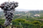 Torna Vinum, la primavera ha sapore grandi vini Piemonte