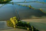 Allarme Anbi sul riso, il rischio è che l'acqua sia insufficiente
