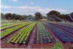 Basta plastica in agricoltura, intesa per utilizzo 'bioteli'