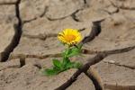 """Allarme siccità, Confagricoltura Calabria: """"Si rischia lo stato di calamità"""""""