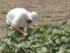 Coldiretti, +6,3% superficie coltivate tra giardini e terrazzi