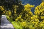 Foto 5: lungo la strada della Mimosa in Costa Azzurra