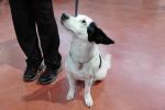 Censis,italiani secondi in Ue per possesso animali domestici