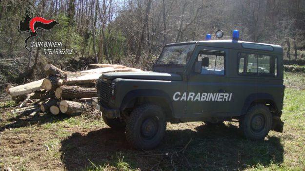 campotenese, parco del pollino, sequestro stalla, Cosenza, Calabria, Cronaca