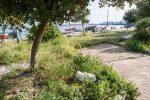 """Messina, il lungomare Belfiore è una """"giungla"""": verde non curato e cartacce ovunque"""
